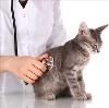 Ветеринарные клиники в Дигоре